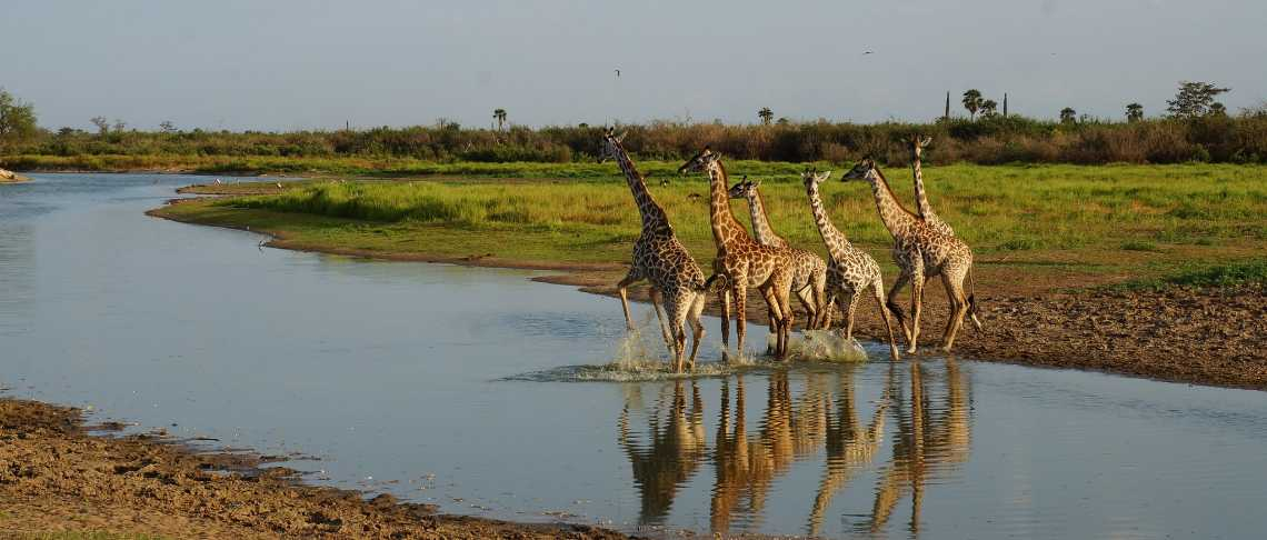 African Explorer - Selous - Lake Manze Tented Camp