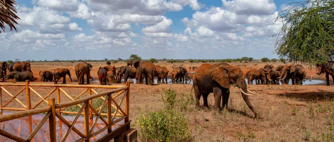 African Explorer - Tsavo East - Ashnil Aruba Lodge