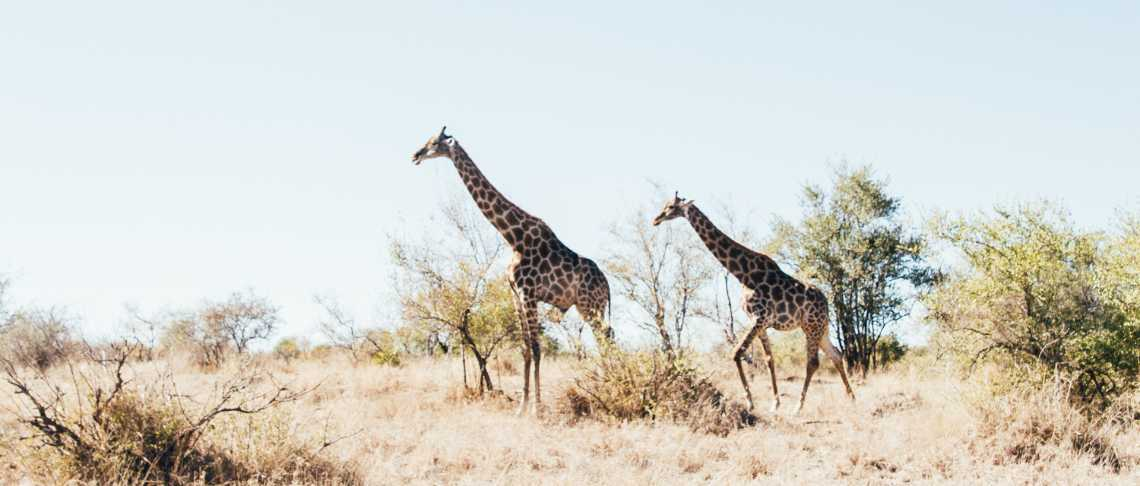 Valle Zoo velocità dating